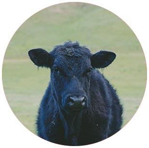 livestock insurance policies (LRP)